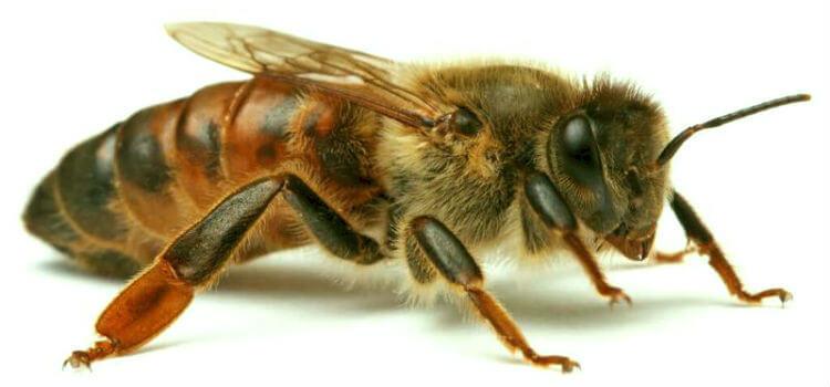 Гибель от укуса осы или пчелы