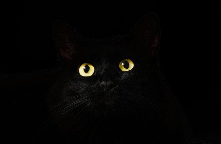 Любимый цвет черный – Mega Millions