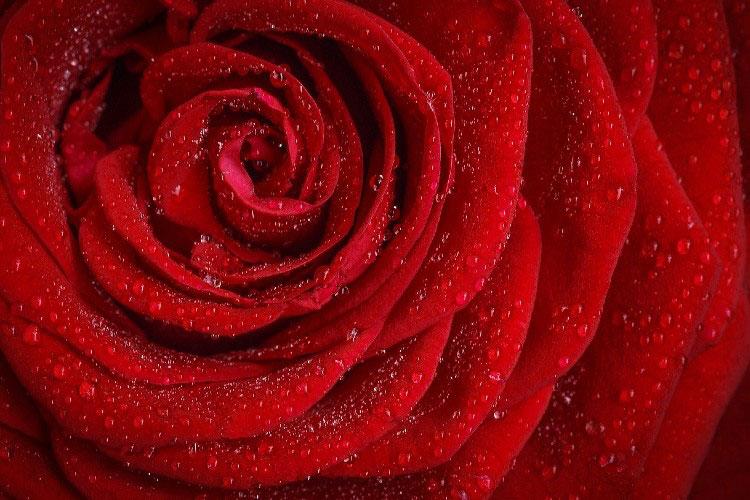 Любимый цвет красный – USA Powerball