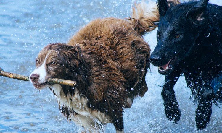 Случайности помогающие выиграть - животные